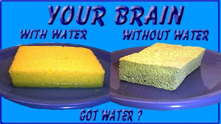 [Your Brain With Water and Without Water!]